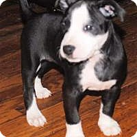 Adopt A Pet :: Akoya - Marlton, NJ