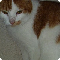 Adopt A Pet :: Theresa - Hamburg, NY