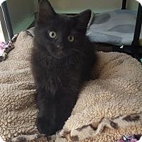 Adopt A Pet :: Spence - Brandon, FL