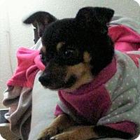 Adopt A Pet :: Emma - Buffalo, NY