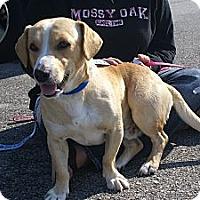 Adopt A Pet :: Roscoe - Raleigh, NC