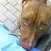 Adopt A Pet :: Natasha - Island Park, NY
