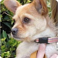 Adopt A Pet :: Cherry - Los Angeles, CA