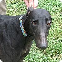 Adopt A Pet :: Leslie - Canadensis, PA