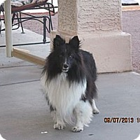 Adopt A Pet :: Holly - apache junction, AZ