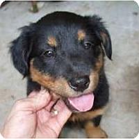 Adopt A Pet :: Java - Douglasville, GA