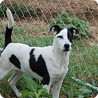 Adopt A Pet :: Buster - Milford, CT
