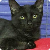 Adopt A Pet :: Jellybean - Seminole, FL
