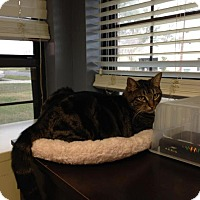 Adopt A Pet :: Oscar - Lake Charles, LA