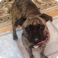 Adopt A Pet :: Suzi - Huntingdon Valley, PA