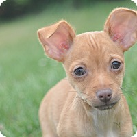 Adopt A Pet :: Paris - Tumwater, WA