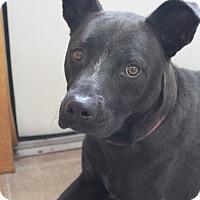 Adopt A Pet :: Freddy - Oakland, AR