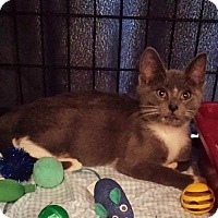 Adopt A Pet :: Gracie - Freeport, NY