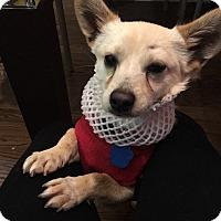 Adopt A Pet :: Lenny - Fullerton, CA