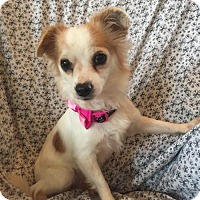 Adopt A Pet :: Chelsi - Tomball, TX