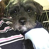 Adopt A Pet :: CLOVER - Rancho Cucamonga, CA