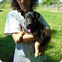 Adopt A Pet :: Simon - Nashua, NH