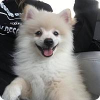 Adopt A Pet :: Giuseppe - Chester, IL