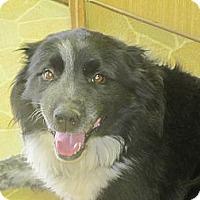Adopt A Pet :: Angus - Kittery, ME