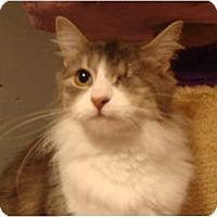 Adopt A Pet :: Precious - Muncie, IN