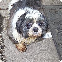 Adopt A Pet :: Lyla - Antioch, IL