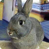 Adopt A Pet :: Lady Jane - Foster, RI