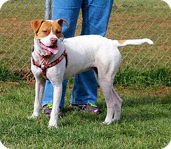 Pit Bull Terrier/Bulldog Mix Dog for adoption in Marietta, Georgia - Penny