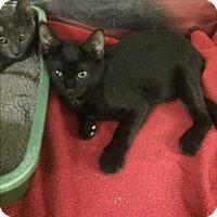 Adopt A Pet :: Rajah - Richboro, PA