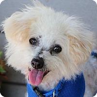 Adopt A Pet :: Jeffrey - La Costa, CA