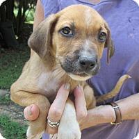 Adopt A Pet :: RUPERT - Brookside, NJ