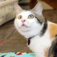Adopt A Pet :: Meisha - Danville, KY