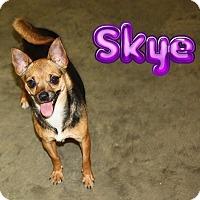 Adopt A Pet :: Sky - Nixa, MO