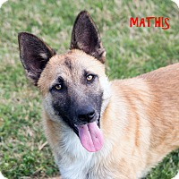 Adopt A Pet :: Mathis - Patterson, CA