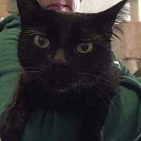 Adopt A Pet :: Aya - Ferndale, MI
