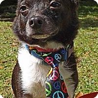 Adopt A Pet :: Eli - Brooksville, FL