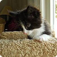 Adopt A Pet :: Eric - CARVER, MA