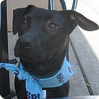 Adopt A Pet :: Miracle - Cleveland, OH
