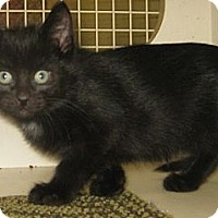 Adopt A Pet :: Devon - Dallas, TX