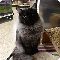 Adopt A Pet :: CAPTAIN JACK - Diamond Bar, CA