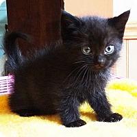 Adopt A Pet :: Taragon - N. Billerica, MA