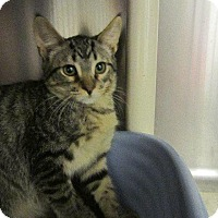 Adopt A Pet :: Hedwig - Grand Junction, CO
