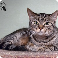 Adopt A Pet :: Dakota - Marlinton, WV