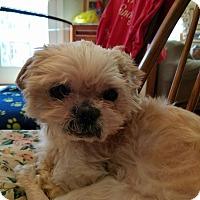Adopt A Pet :: Sparkie - Oak Ridge, NJ