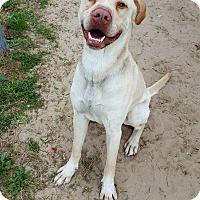 Adopt A Pet :: Pinecone - Jacksonville, FL