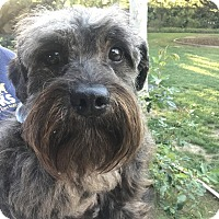 Adopt A Pet :: Girard - Thousand Oaks, CA