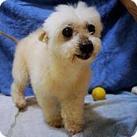 Adopt A Pet :: Leila - Bealeton, VA