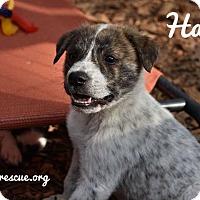 Adopt A Pet :: Hatch - Milton, GA