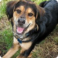 Adopt A Pet :: Paisley - Arlington, VA