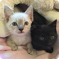 Adopt A Pet :: Fumiko and Fugi - San Antonio, TX
