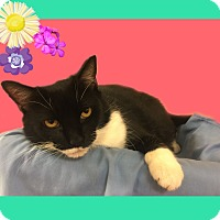 Adopt A Pet :: Bonnie - Jackson, NJ